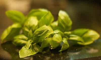 diett som funker Grønne kaffebønnepiller